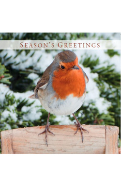 Robin - charity cards