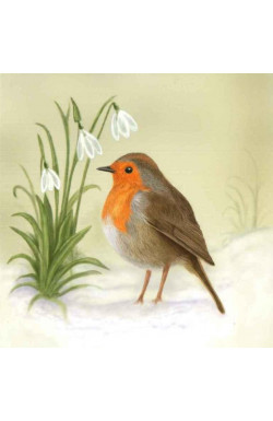 Robins - Pk of 10 Christmas Cards